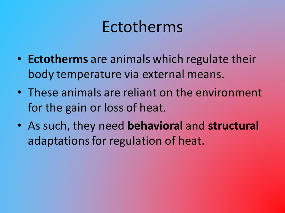 Ectotherms Ectotherms are animals which regulate their body temperature via external means. These animals are reliant on the environment for the gain