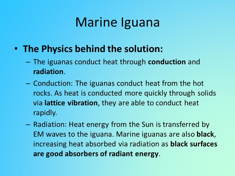 Marine Iguana The Physics behind the solution: – The iguanas conduct heat through conduction and radiation. – Conduction: The iguanas conduct heat fro