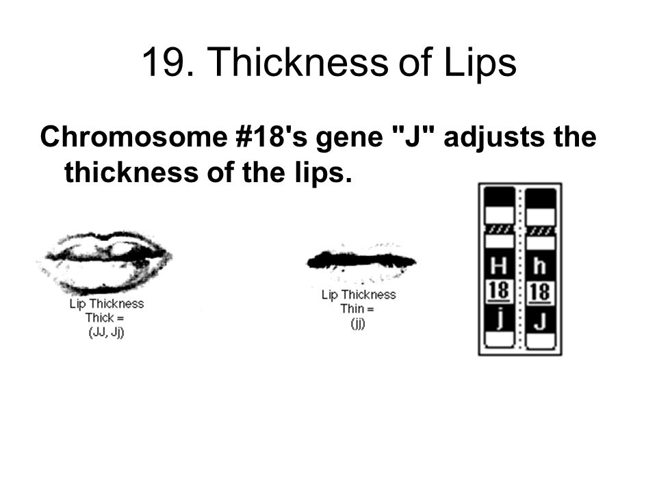 19. Thickness of Lips Chromosome #18's gene