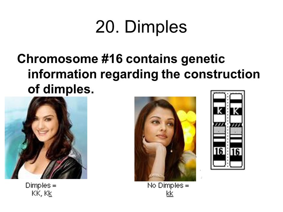 20. Dimples Chromosome #16 contains genetic information regarding the construction of dimples.