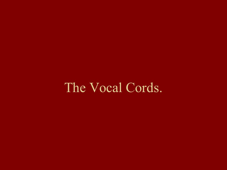 The Vocal Cords.