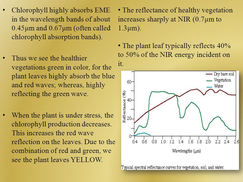 Chlorophyll highly absorbs EME in the wavelength bands of about 0.45μm and 0.67μm (often called chlorophyll absorption bands).