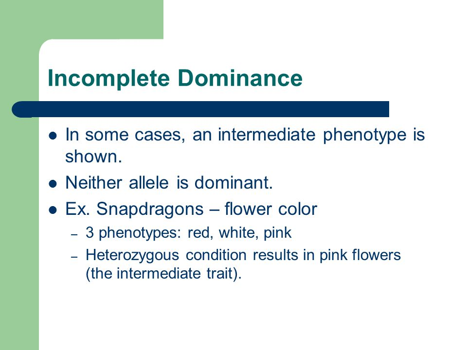 Incomplete Dominance In some cases, an intermediate phenotype is shown. Neither allele is dominant. Ex. Snapdragons – flower color – 3 phenotypes: red