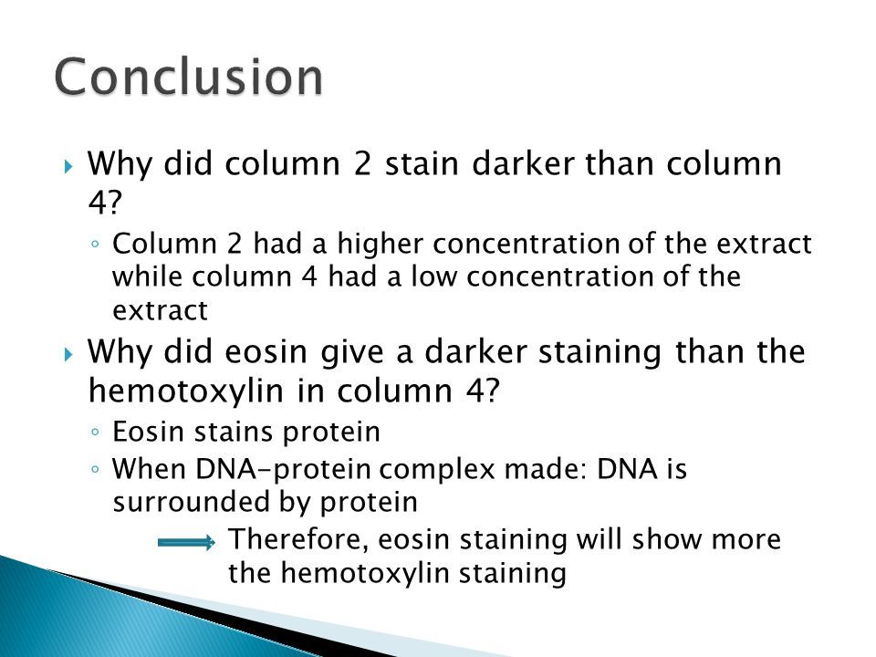  Why did column 2 stain darker than column 4? ◦ Column 2 had a higher concentration of the extract while column 4 had a low concentration of the extr