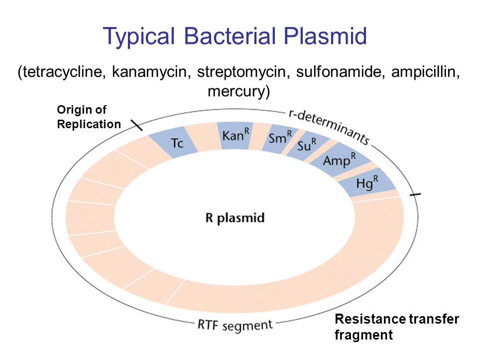 (tetracycline, kanamycin, streptomycin, sulfonamide, ampicillin, mercury) Typical Bacterial Plasmid Resistance transfer fragment Origin of Replication