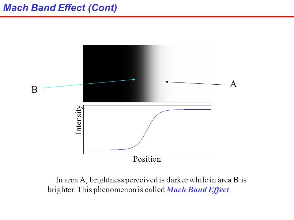 Mach Band Effect Intensities of surrounding points effect perceived brightness at each point. In this image, edges between bars appear brighter on the