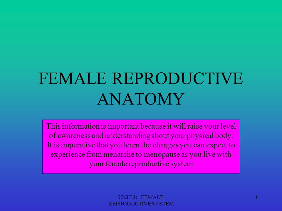 UNIT 3: FEMALE REPRODUCTIVE SYSTEM 2 EXTERNAL GENTILIA The vulva refers to those parts that are outwardly visible The vulva includes: Mons pubis Labia majora Labia minora Clitoris Urethral opening Vaginal opening Perineum Individual differences in: Size Coloration Shape Of external gentalia are common