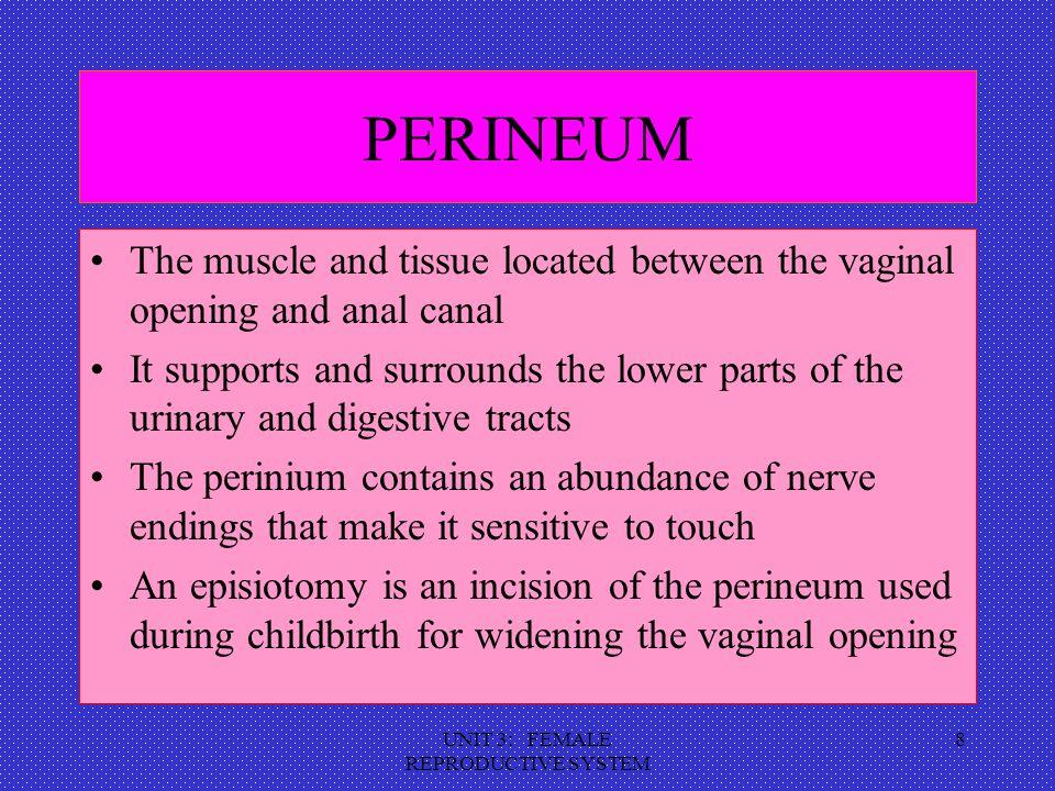 UNIT 3: FEMALE REPRODUCTIVE SYSTEM 9 INTERNAL GENITALIA The internal genitalia consists of the: Vagina Cervix Uterus Fallopian Tubes Ovaries