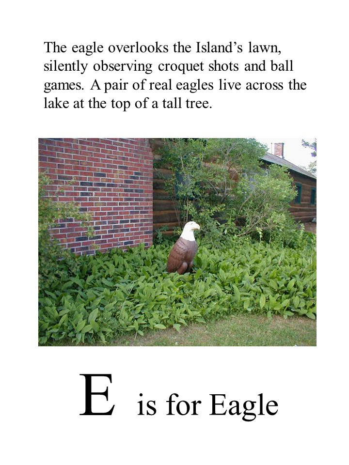 E is for Eagle The eagle overlooks the Island's lawn, silently observing croquet shots and ball games.