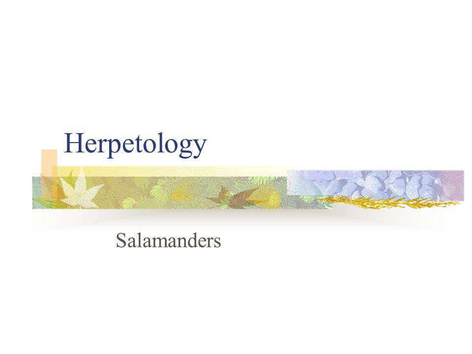 Herpetology Salamanders