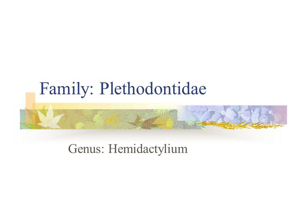 Family: Plethodontidae Genus: Hemidactylium