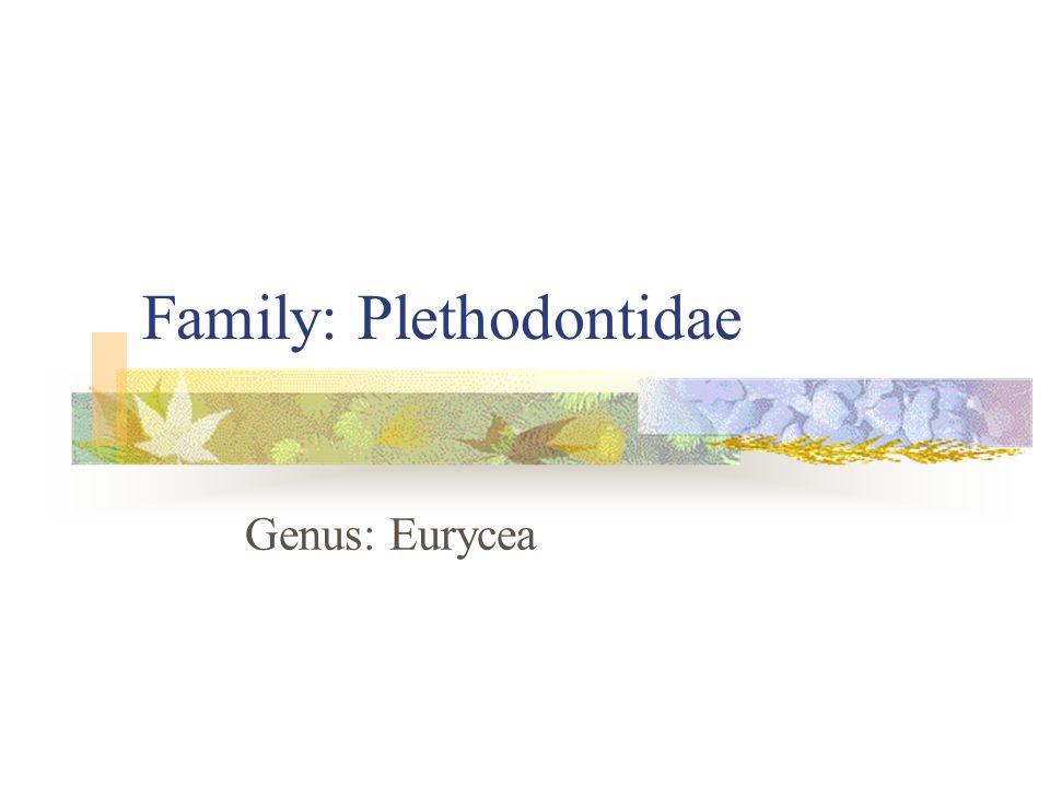 Family: Plethodontidae Genus: Eurycea