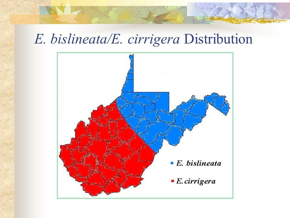 E. bislineata/E. cirrigera Distribution