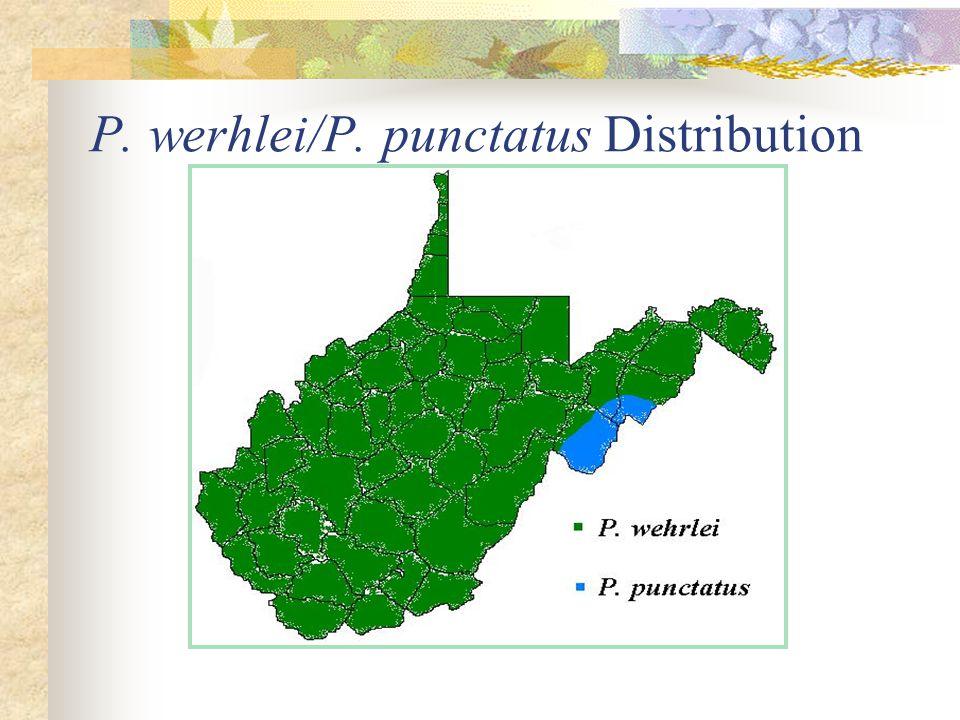 P. werhlei/P. punctatus Distribution