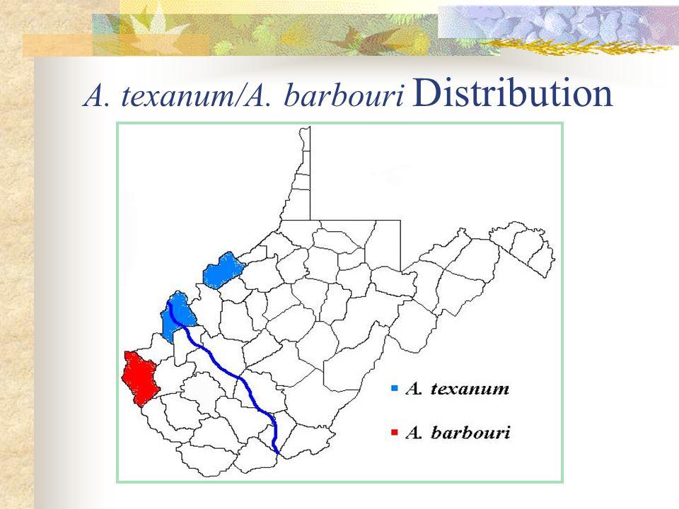 A. texanum/A. barbouri Distribution
