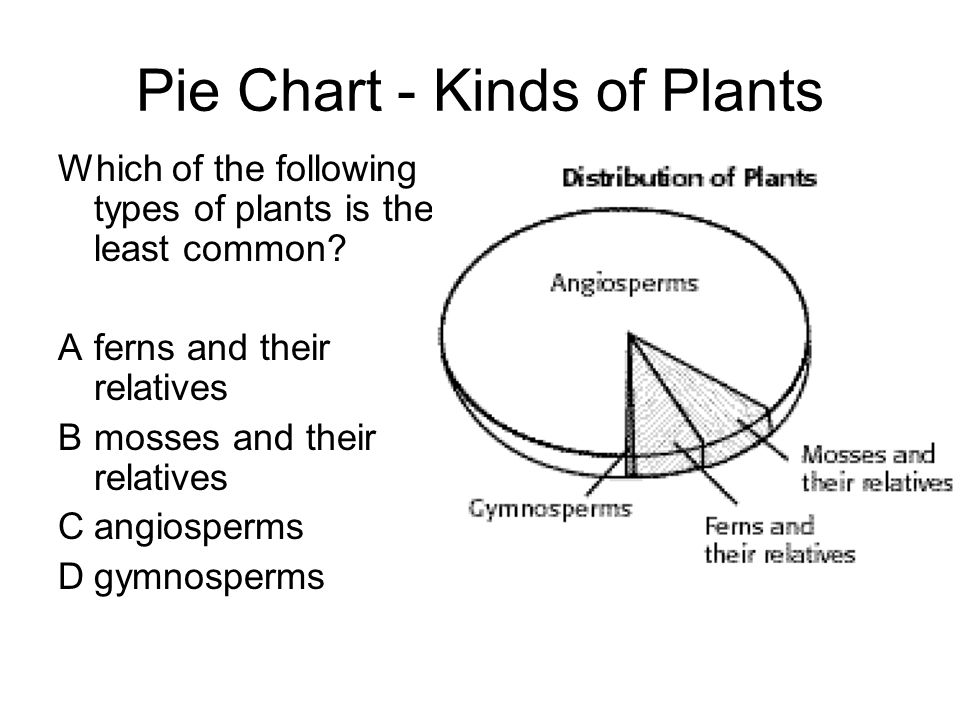 Pie Chart - Kinds of Plants Which of the following types of plants is the least common.
