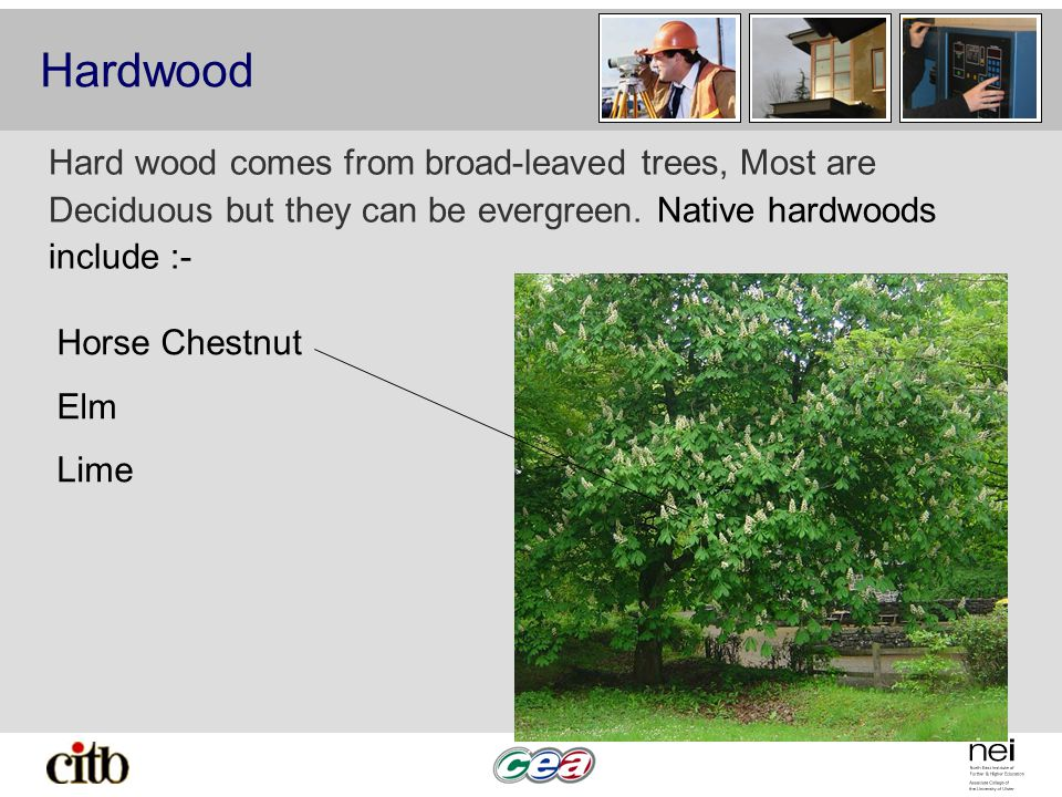 Hardwood Hard wood comes from broad-leaved trees, Most are Deciduous but they can be evergreen.