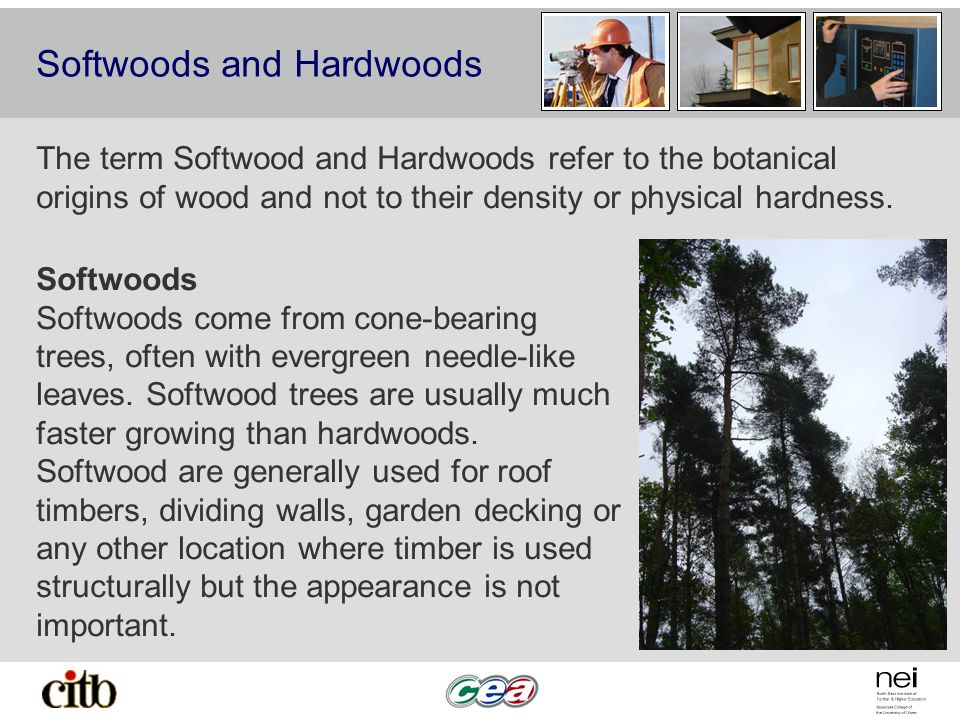 Softwoods and Hardwoods The term Softwood and Hardwoods refer to the botanical origins of wood and not to their density or physical hardness.