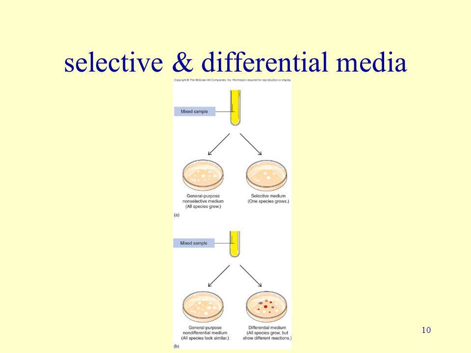 10 selective & differential media