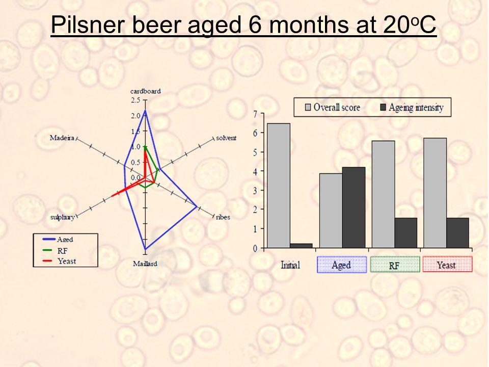 Pilsner beer aged 6 months at 20 o C