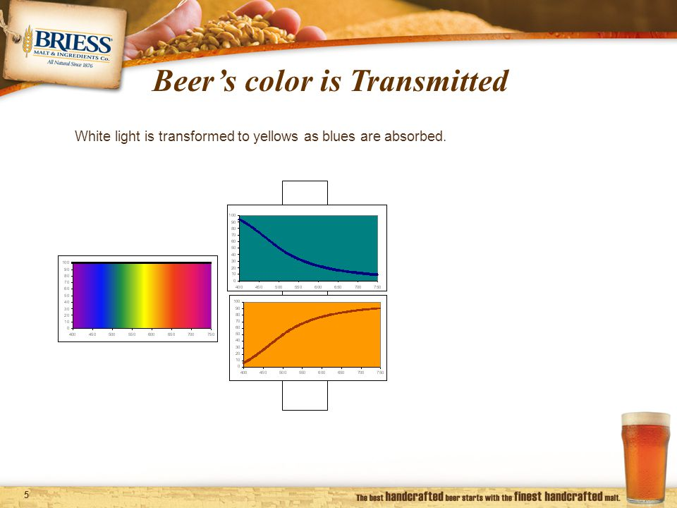 5 Beer's color is Transmitted White light is transformed to yellows as blues are absorbed.