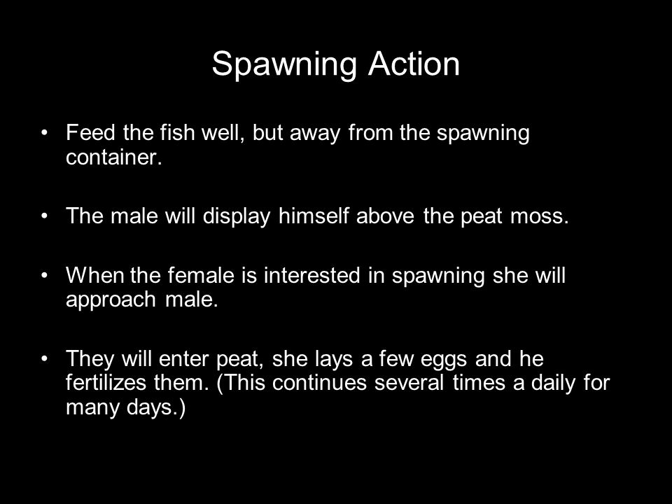Spawning Action Feed the fish well, but away from the spawning container.