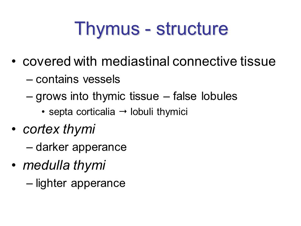 Thymus - structure covered with mediastinal connective tissue –contains vessels –grows into thymic tissue – false lobules septa corticalia  lobuli thymici cortex thymi –darker apperance medulla thymi –lighter apperance