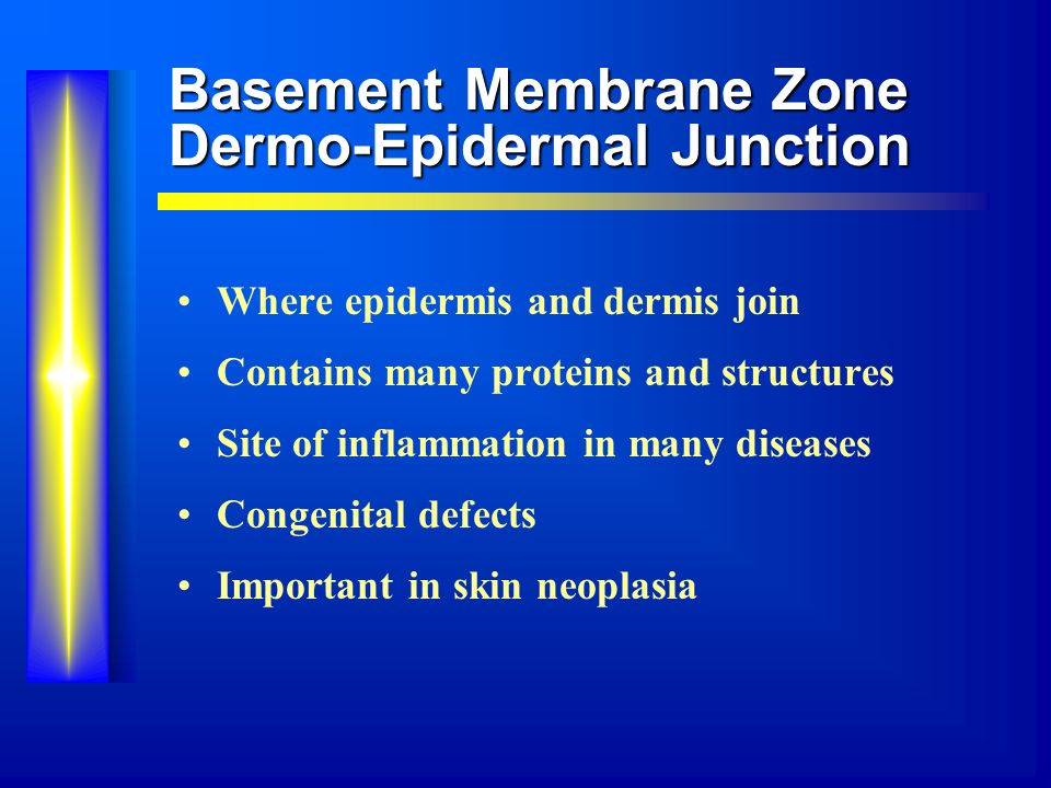 Basement Membrane Zone Dermo-Epidermal Junction Where epidermis and dermis join Contains many proteins and structures Site of inflammation in many diseases Congenital defects Important in skin neoplasia