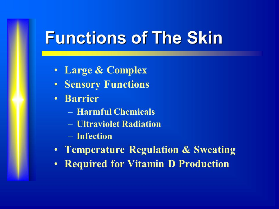 Functions of The Skin Large & Complex Sensory Functions Barrier –Harmful Chemicals –Ultraviolet Radiation –Infection Temperature Regulation & Sweating Required for Vitamin D Production