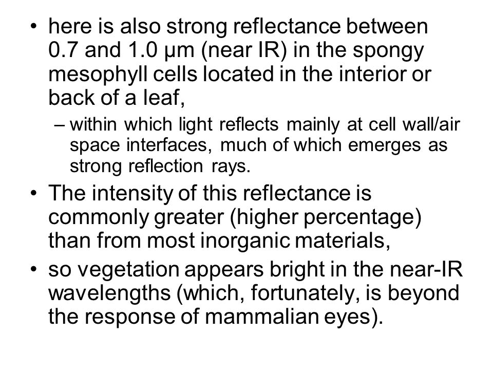 here is also strong reflectance between 0.7 and 1.0 µm (near IR) in the spongy mesophyll cells located in the interior or back of a leaf, –within which light reflects mainly at cell wall/air space interfaces, much of which emerges as strong reflection rays.