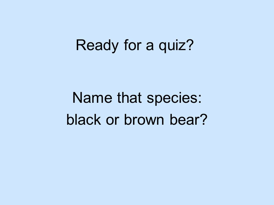 Ready for a quiz? Name that species: black or brown bear?