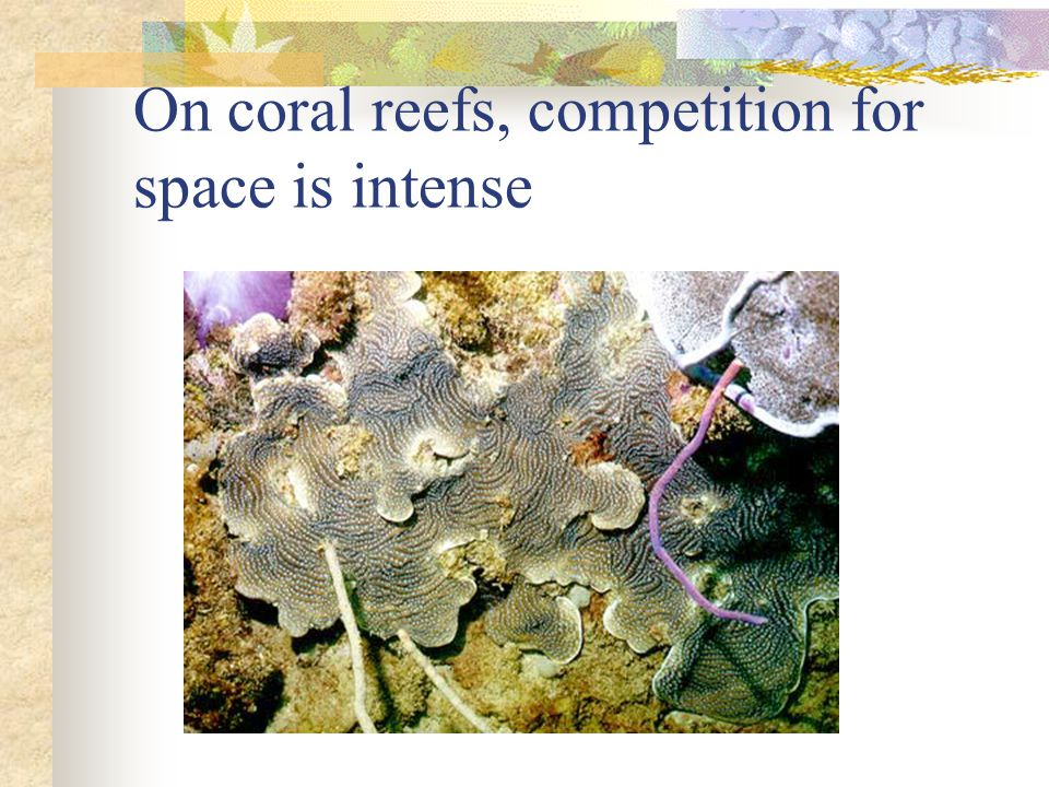 On coral reefs, competition for space is intense