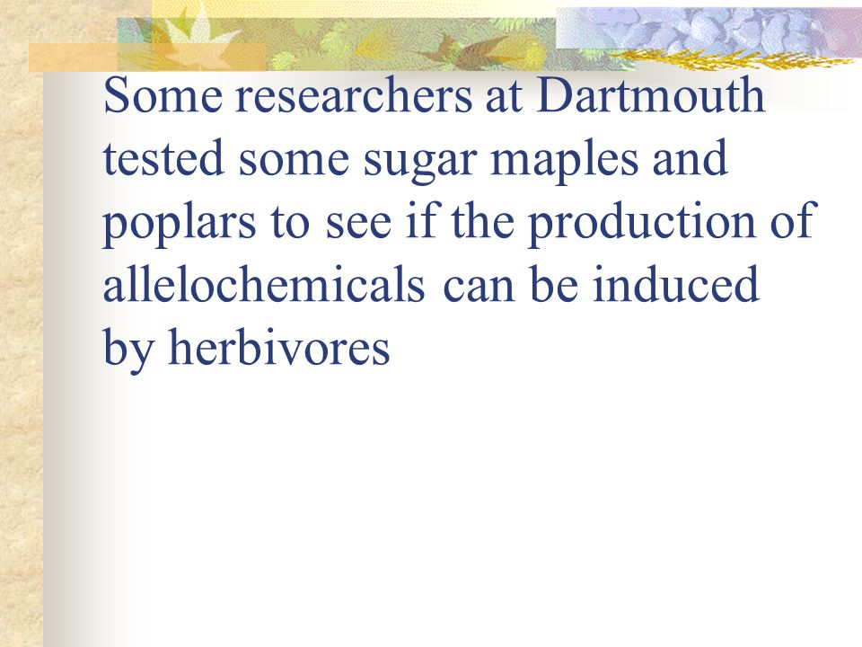 Some researchers at Dartmouth tested some sugar maples and poplars to see if the production of allelochemicals can be induced by herbivores