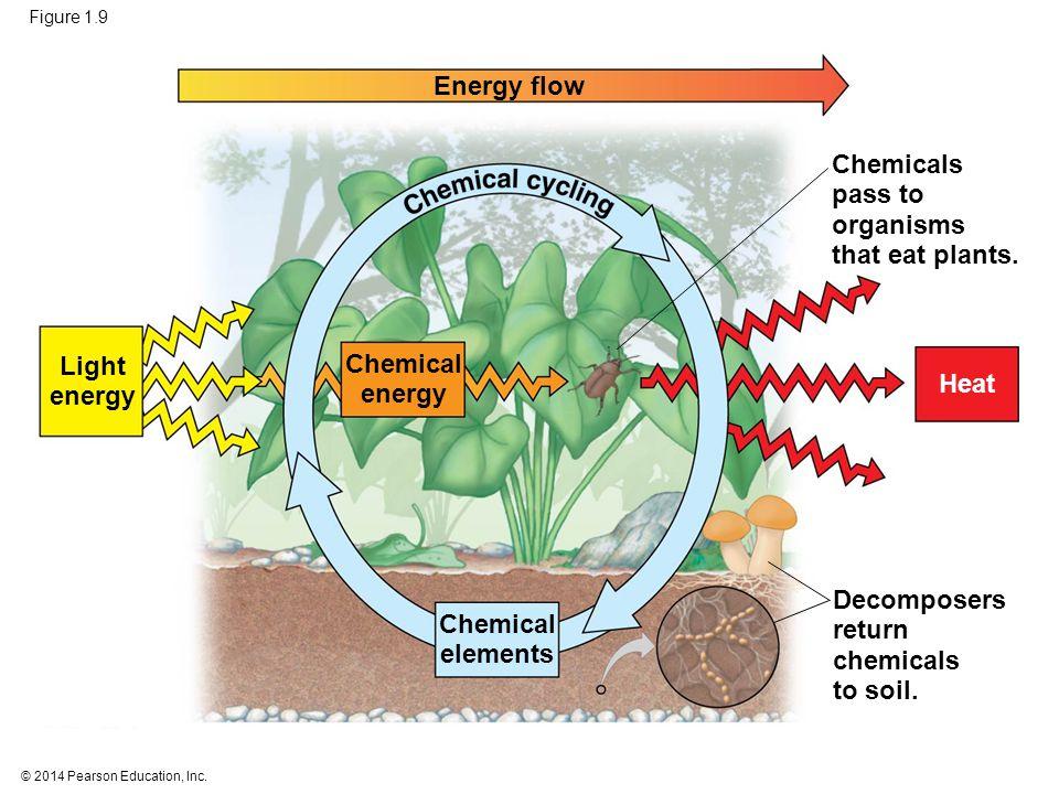 © 2014 Pearson Education, Inc. Figure 1.9 Energy flow Light energy Chemical energy Chemical elements Chemicals pass to organisms that eat plants. Deco