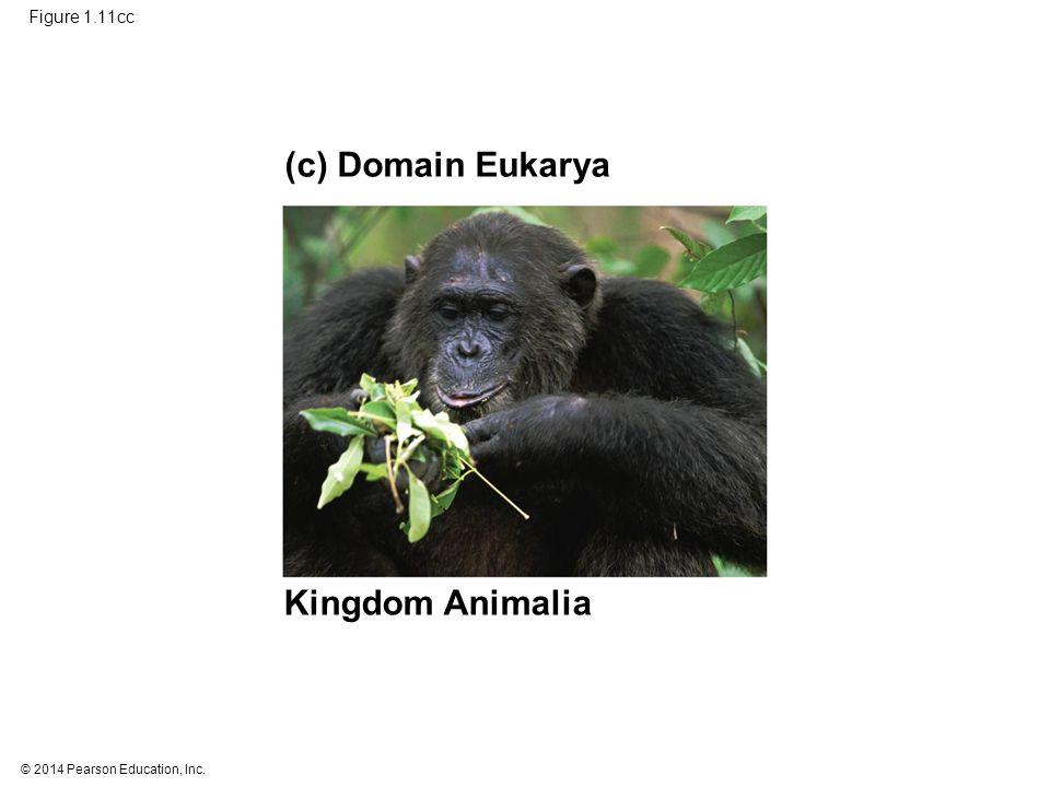 © 2014 Pearson Education, Inc. Figure 1.11cc (c) Domain Eukarya Kingdom Animalia