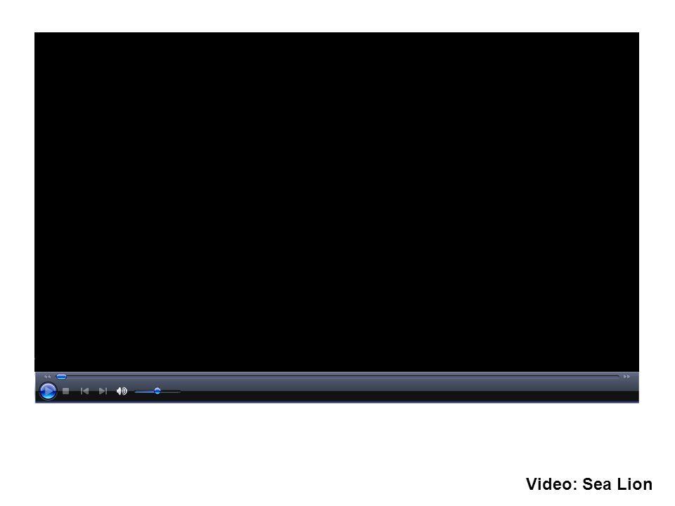 Video: Sea Lion