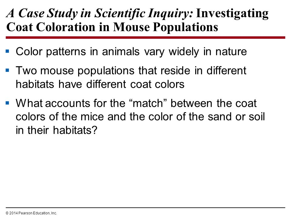 © 2014 Pearson Education, Inc. A Case Study in Scientific Inquiry: Investigating Coat Coloration in Mouse Populations  Color patterns in animals vary