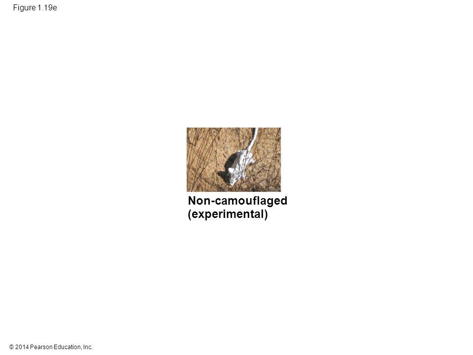 © 2014 Pearson Education, Inc. Figure 1.19e Non-camouflaged (experimental)