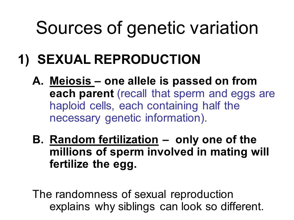 Sources of genetic variation 1)SEXUAL REPRODUCTION A.Meiosis – one allele is passed on from each parent (recall that sperm and eggs are haploid cells, each containing half the necessary genetic information).