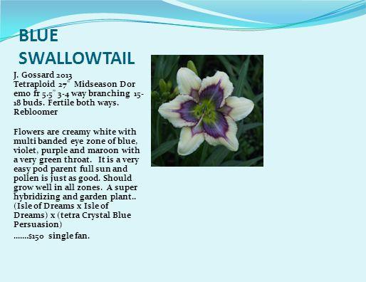 BLUE SWALLOWTAIL J.