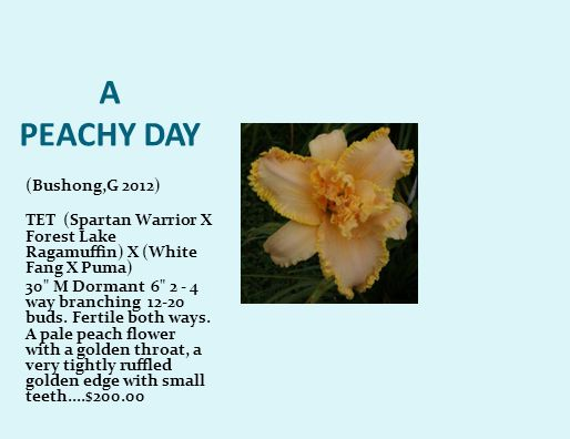 A PEACHY DAY (Bushong,G 2012) TET (Spartan Warrior X Forest Lake Ragamuffin) X (White Fang X Puma) 30 M Dormant 6 2 - 4 way branching 12-20 buds.