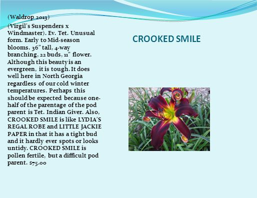 CROOKED SMILE (Waldrop 2013) (Virgil's Suspenders x Windmaster).