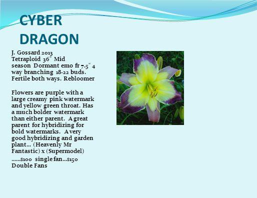 CYBER DRAGON J.