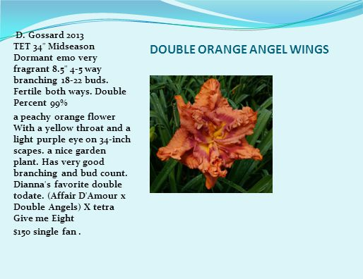 DOUBLE ORANGE ANGEL WINGS D.