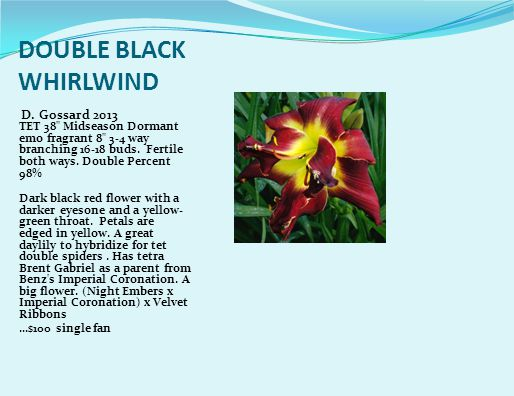 DOUBLE BLACK WHIRLWIND D.