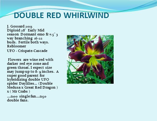 DOUBLE RED WHIRLWIND J.