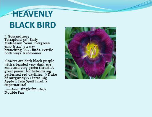 HEAVENLY BLACK BIRD J.