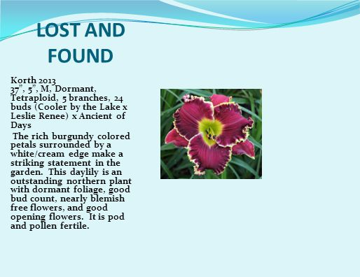 LOST AND FOUND Korth 2013 37 , 5 , M, Dormant, Tetraploid, 5 branches, 24 buds (Cooler by the Lake x Leslie Renee) x Ancient of Days The rich burgundy colored petals surrounded by a white/cream edge make a striking statement in the garden.