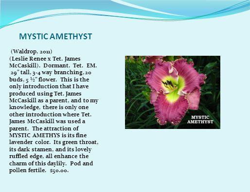 MYSTIC AMETHYST (Waldrop, 2011) (Leslie Renee x Tet.