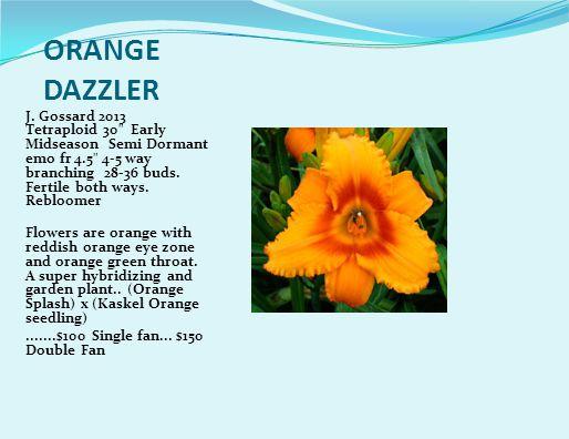 ORANGE DAZZLER J.